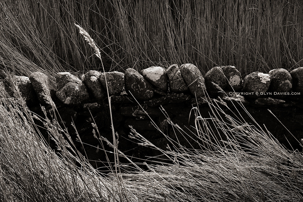 Reeds surround a low stone wall at the high tide margin at the edge of the tidal Dulas Estuary, East Anglesey
