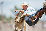 Steer Wrestler Garrett Smith of Rexburg, Idaho grabs the horns of a steer at the Cheyenne Frontier Days rodeo at Frontier Park Arena July 24, 2015 in Cheyenne, Wyoming. Frontier Days celebrates the cowboy traditions of the west with a rodeo, parade and fair.