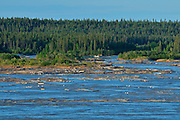 Pelican Rapids on the Slave River<br /> near Ft. Smith<br /> Northwest Territories<br /> Canada