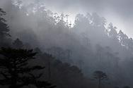 Fog and Evergreens along the Bumthang - Ura Highway, Bhutan, 2014