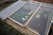 Glass garden cold frame