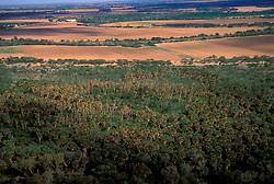 Sabol Palm Grove near South Texas Farmland