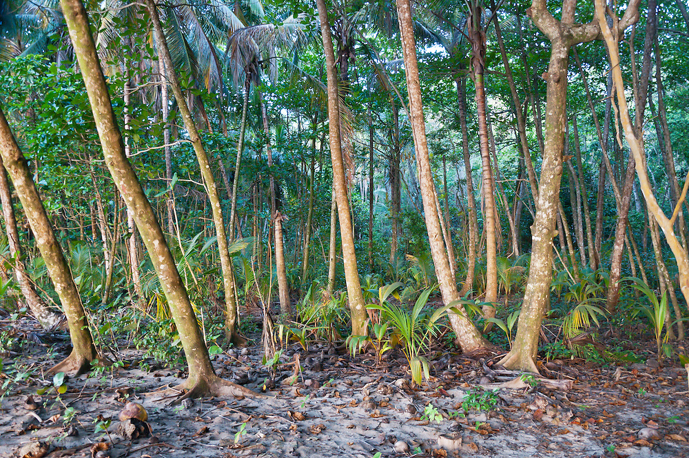 The rainforest ends at the beach, in Manzanillo National Park, Costa Rica. Photo William Byrne Drumm.