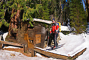 Backcountry skier at Tharp's Log, Giant Forest, Sequoia National Park, California