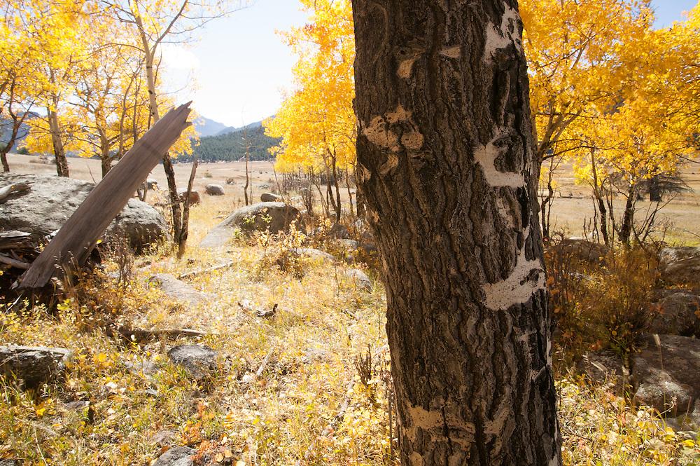 Rocky Mountain National Park, Colorado.