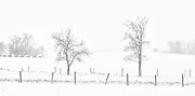 Whiteout on the Canadian prairie<br /> Pelley<br /> Saskatchewan<br /> Canada