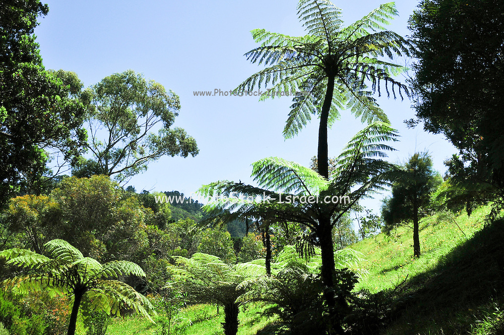 New Zealand, North Island, Wellington, Wellington Botanic Garden
