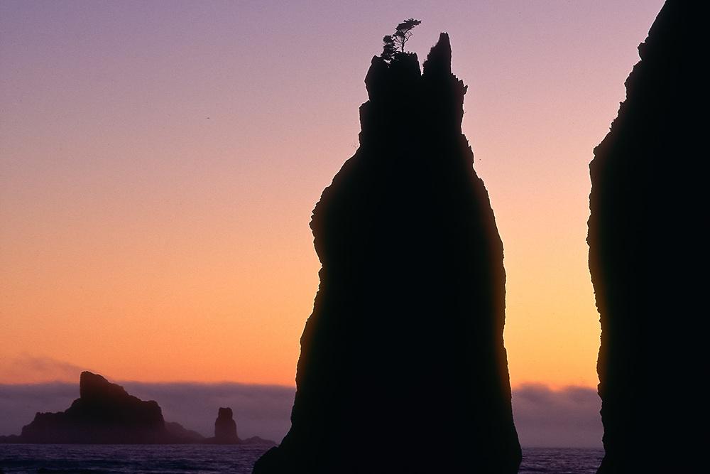 Point of Arches, sea stacks, summer twilight, Pacific Coast, Olympic National Park, Washington, USA