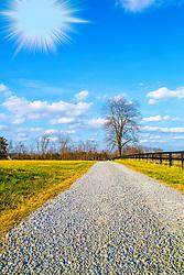 A Bright Sun Shines Down The Gravel Path