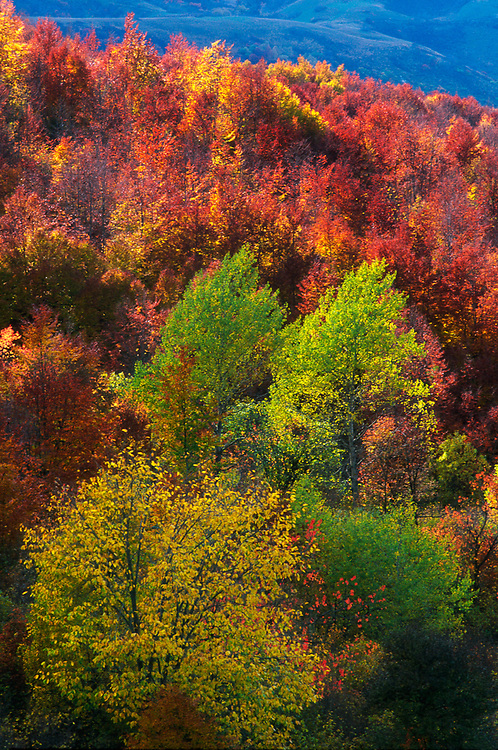 Deciduous forest, autumn, Racha Region, northwestern The Country of Georgia