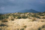 Clouds roll over and New Zealand flax (Phormium tenax) next to Big Sandhill, The Southern Circuit, Stewart Island / Rakiura, New Zealand Ⓒ Davis Ulands | davisulands.com