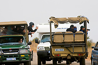 Tourists on safari watching cheetahs, Kruger National Park, South Africa