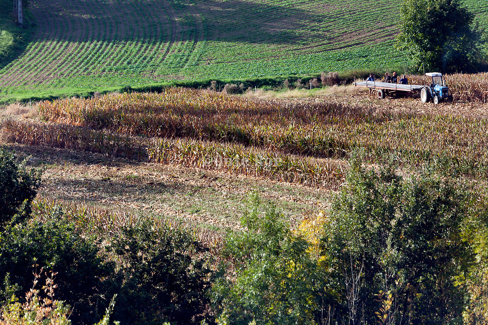 removing of the irrigation pipes in a cornfield France