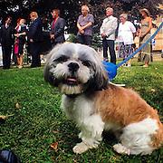 The Wedding Dog. #semily #wedding #marriage #dog #czechrepublic #animal #ritual #tschechien #hund