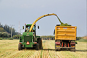 Israel, Jordan Valley, Kibbutz Ashdot Yaacov, Wheat harvest for silage