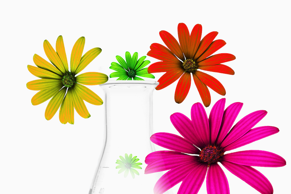 Illustration of flowers  with conical flask