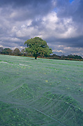 A08ARD Surreal English landscape with crops covered by fleece netting Alderton Suffolk England