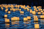 Many floating lanterns float at the Lantern Floating Ceremony in Honolulu, Hawaii.