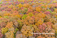 63876-02514 Aerial view of fall color trees Stephen A. Forbes State Park Marion Co. IL