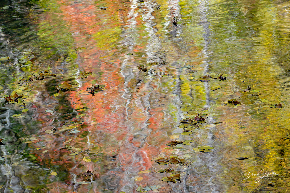 Autumn trees reflected in the Middle Prong of the Little River at Tremont, Great Smoky Mountains NP, Tennessee, USA