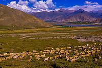 Yerpa Valley, Tibet (Xizang), China.