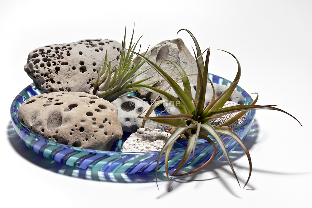 pebbles and cactus plants on a decorative glass plate