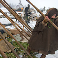 North of the Arctic Circle in Russia, 77-year old Komi reindeer herder Marie Terentéva, a nomad,  disassembles spruce poles that hold up her chum, while others work on other chums.