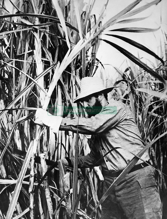 Apr. 29, 1965 - Havana, Cuba - Cuban revolutionary leader who led his country from 1959 until his retirement in 2008, FIDEL CASTRO transformed Cuba into the first communist state in the Western Hemisphere. President Castro outlasted no fewer than nine American presidents since he took power in 1959. PICTURED: FIDEL CASTRO cutting sugarcane. (Credit Image: © Keystone Press Agency/Keystone USA via ZUMAPRESS.com)