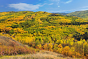 Autumn foliage in mixedwood forest<br /> Peace River<br /> Alberta<br /> Canada<br /> Peace River<br /> Alberta<br /> Canada