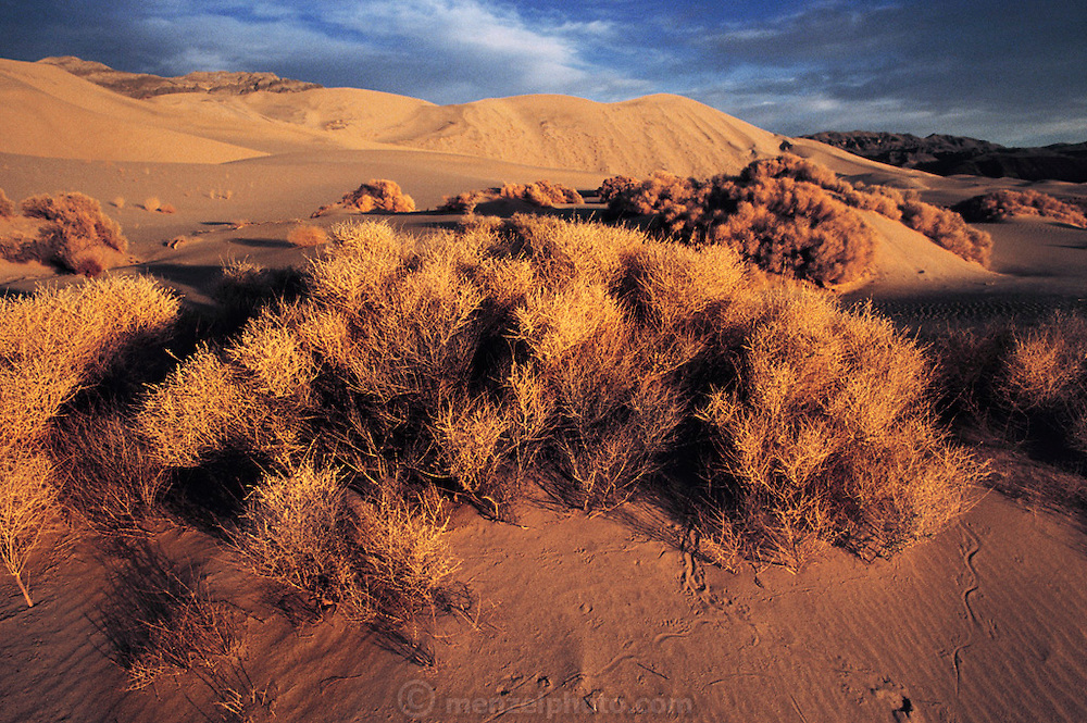 Eureka Dunes, California - the tallest dunes in the United States. Route 395: Eastern Sierra Nevada Mountains of California.