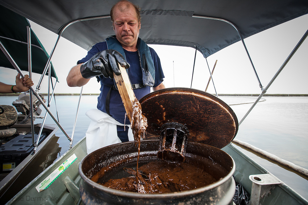 August, 8, 2010, Harold Cline, a member of the Plaquemines  Parish Task Force, inspects oily water after vacuuming up a barrel from Barataria Bay where the BP oil spill hit the hardest.