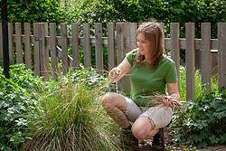 Combing through a stipa to remove dead grass
