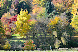 © Licensed to London News Pictures. 30/10/2012. Winkworth, UK A man photographs  the colourful trees. Autumn Colour at Winkworth Arboretum in Surrey today 30th October 2012. Photo credit : Stephen Simpson/LNP