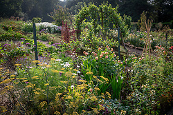 General view of the cutting garden at Chatsworth House. Pear arch, dahlias, cosmos, fennel and Verbena bonariensis.