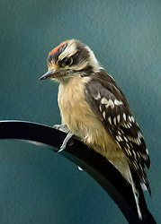 A Flowing Downy Woodpecker Perched on a Pole against a Blue Backdrop