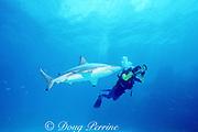 shark researcher Dr. Erich Ritter and blacktip shark, Carcharhinus limbatus, Walker's Cay, Abaco Islands, Bahamas ( Western Atlantic Ocean )