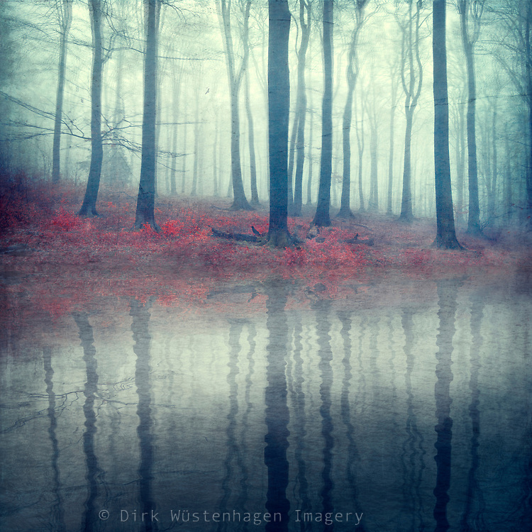 Trees aon a misty autumn morning reflected in a pond - manipulated photograph<br /> Redbubble: https://www.redbubble.com/people/dyrkwyst/works/44790192-forest-of-illusions?asc=u