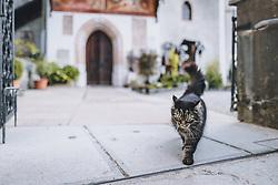 THEMENBILD - eine getigerte Katze am Friedhof während der Corona Pandemie, aufgenommen am 17. April 2019 in Hallstatt, Österreich // a tabby cat at the cemetery during the Corona Pandemic in Hallstatt, Austria on 2020/04/17. EXPA Pictures © 2020, PhotoCredit: EXPA/ JFK