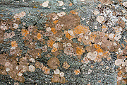 Orange and white lichen pattern on rock. Crucible Lake Track side trip from the Gillespie Pass Circuit in Mount Aspiring National Park, in the Southern Alps. Makarora, Otago region, South Island of New Zealand. UNESCO lists Mount Aspiring as part of Wahipounamu - South West New Zealand World Heritage Area.
