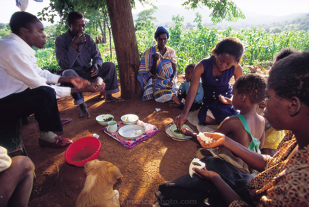 Muditami Munzhedzi and her family share a breakfast of mopane worm stew; the dried caterpillars are reconstituted in hot water and are then stewed with the dish's other ingredients. Eaten dry the worms are hard, crispy, and woody tasting. Tshamulavhu, Mpumalanga, South Africa. (Man Eating Bugs page 135)