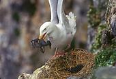 Seabird Predation