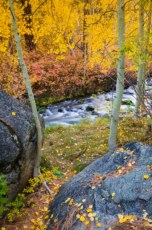 Fall color along Lundy Creek, Inyo National Forest, Sierra Nevada Mountains, California USA
