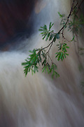 Sao Goncalo do Rio Preto_MG, Brasil...Parque Estadual do Rio Preto em Sao Goncalo do Rio Preto, Minas Gerais. Na foto detalhe de uma cachoeira...The Rio Preto State Park in Sao Goncalo do Rio Preto, Minas Gerais. In this photo a waterfall...Foto: LEO DRUMOND / NITRO