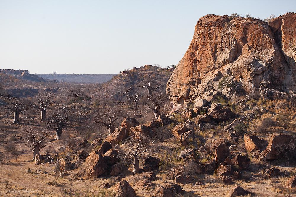 Mapungubwe Hill. Mapungubwe National Park and World Heritage Site, Leokwe Camp, South Africa, September 2009, Organization for Tropical Studies Trip.