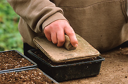 Sowing seed in half trays<br /> Firming compost with presser board