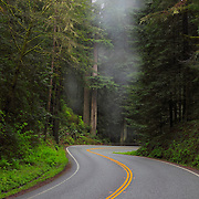 Redwood Grove - S Curve On Hwy 199 - Redwood National Forest - Northern CA