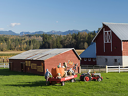 United States, Wasshiington, Carnation, Remlinger Farms at Halloween
