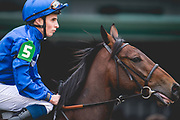 November 1-3, 2018: Breeders' Cup Horse Racing World Championships. Le Pelosa and William Buck head to the post Juvenile Fillies Turf G1