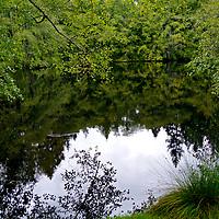 Bloedel Reserve, Bainbridge Island, WA editted 2/9/18, 1st printed5/9/18