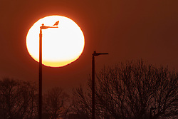 © Licensed to London News Pictures. 18/04/2021. London, UK. A bird perches on a lamppost during sunrise on Blackheath Common in South East London. Temperatures are expected to rise with highs of 17 degrees forecasted for parts of London and South East England today . Photo credit: George Cracknell Wright/LNP